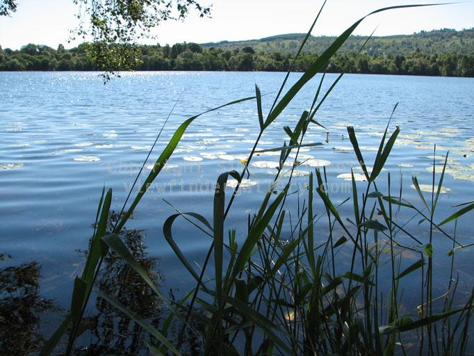 Reeds and a lake